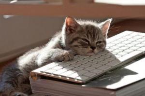 writingcat