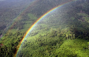 360_rainforest_value_0327