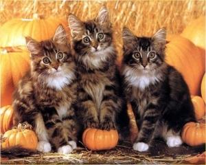 halloween_kittehs