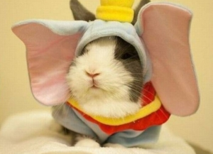l-6-cute-animals-rabbit-elephant-wannabe-1