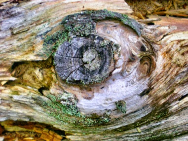 Tree trunk dying in beauty